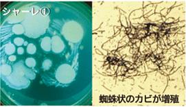 雑菌 未活用クロス